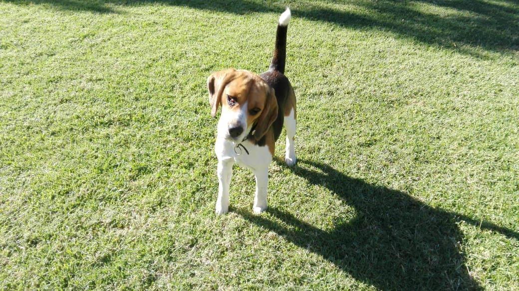 pension canina la brava mascotas (1)