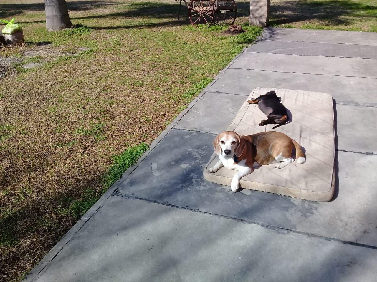 pension canina la brava mascotas (10)