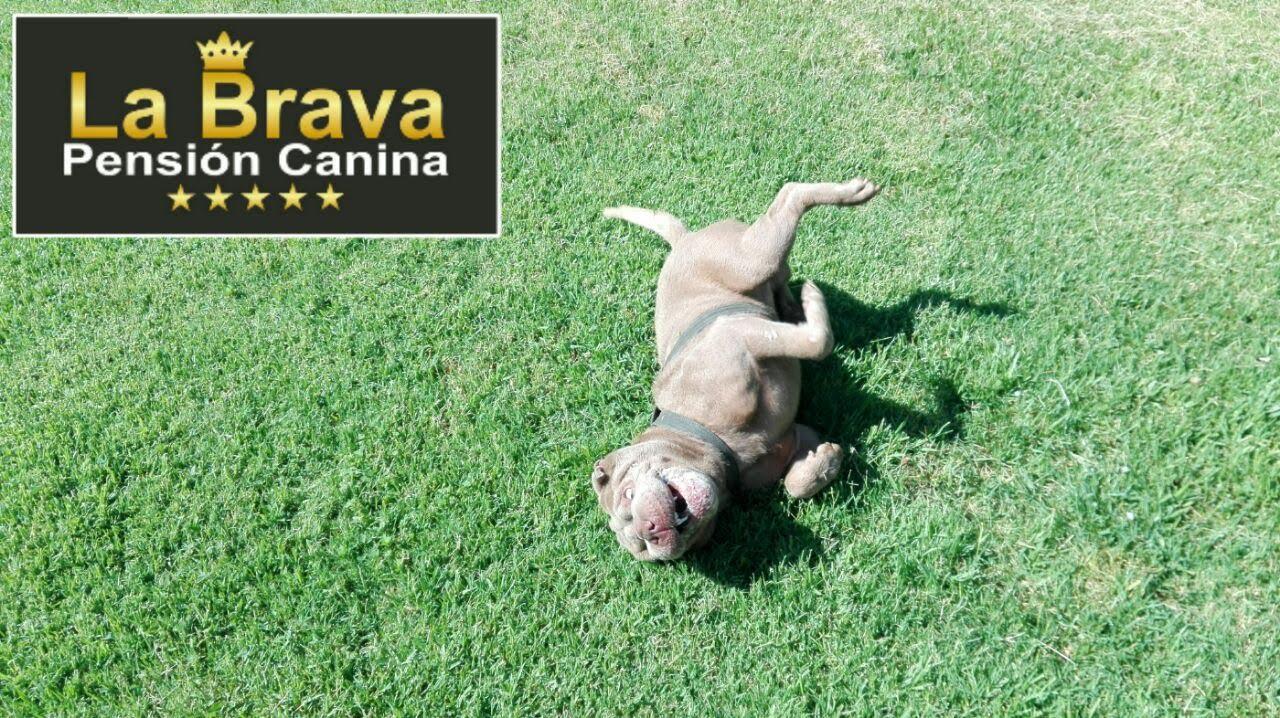pension canina la brava mascotas (100)