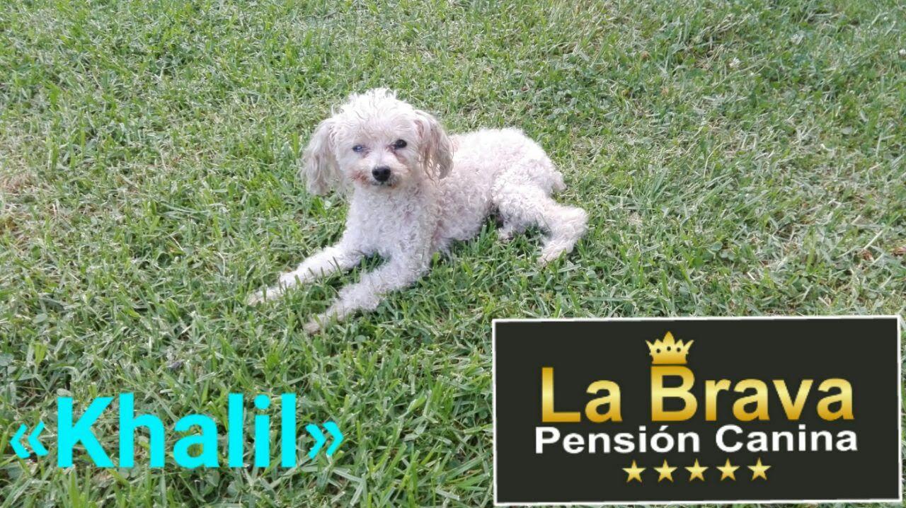 pension canina la brava mascotas (103)