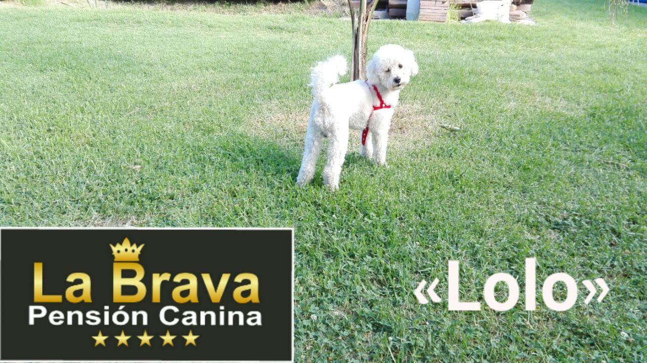 pension canina la brava mascotas (104)