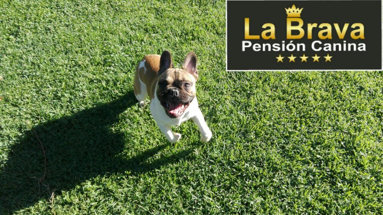 pension canina la brava mascotas (105)