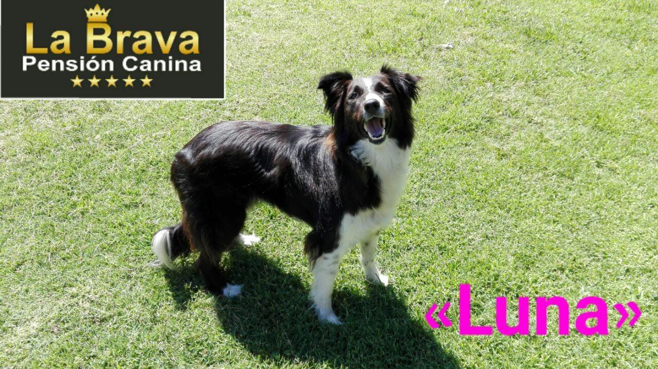 pension canina la brava mascotas (106)