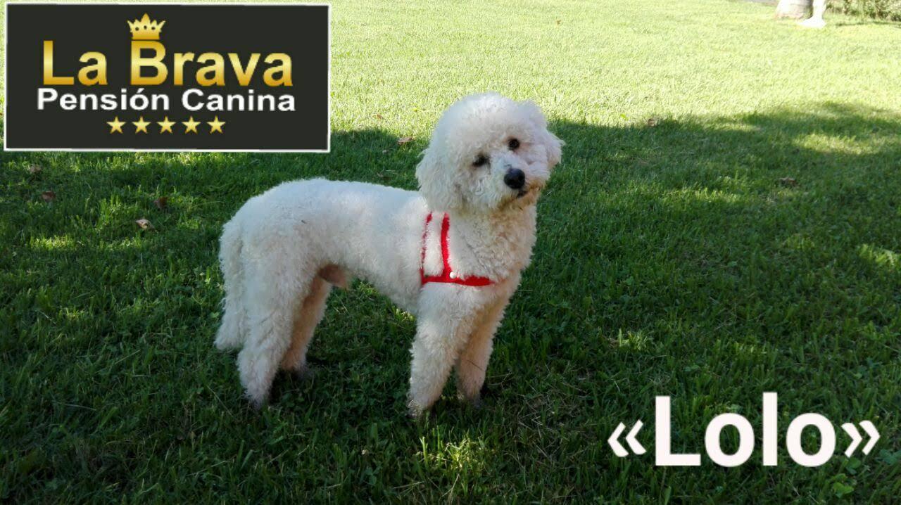 pension canina la brava mascotas (107)