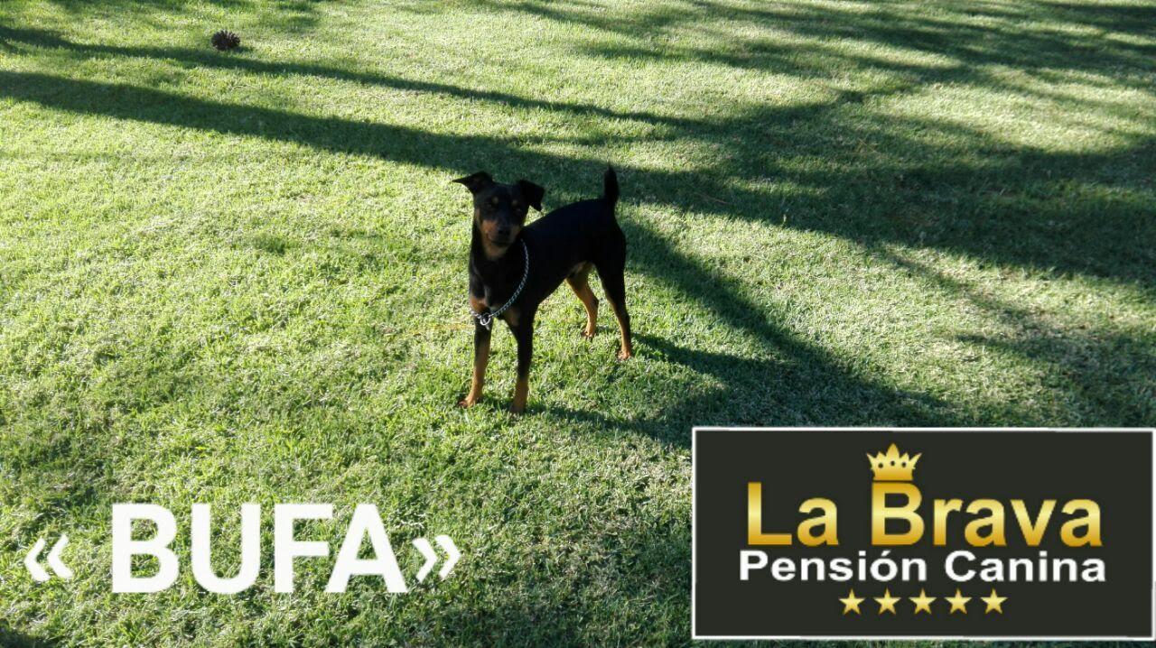 pension canina la brava mascotas (108)