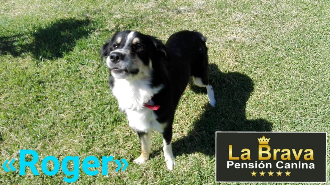 pension canina la brava mascotas (109)