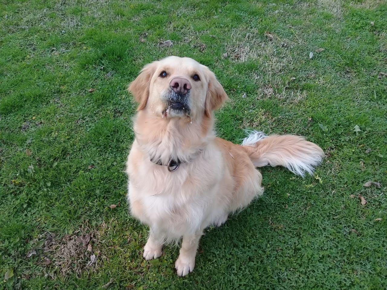 pension canina la brava mascotas (11)