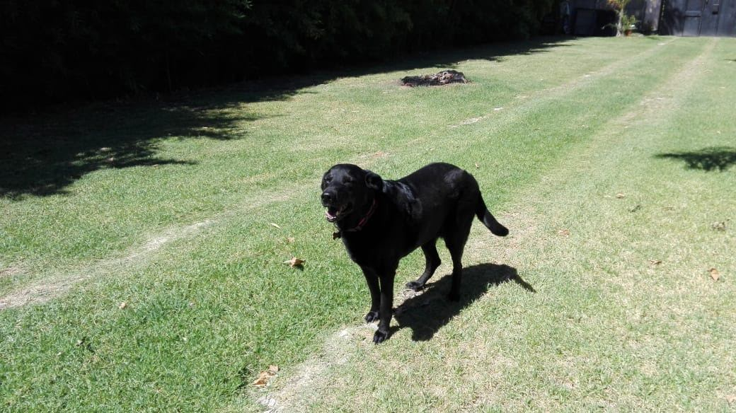 pension canina la brava mascotas (111)