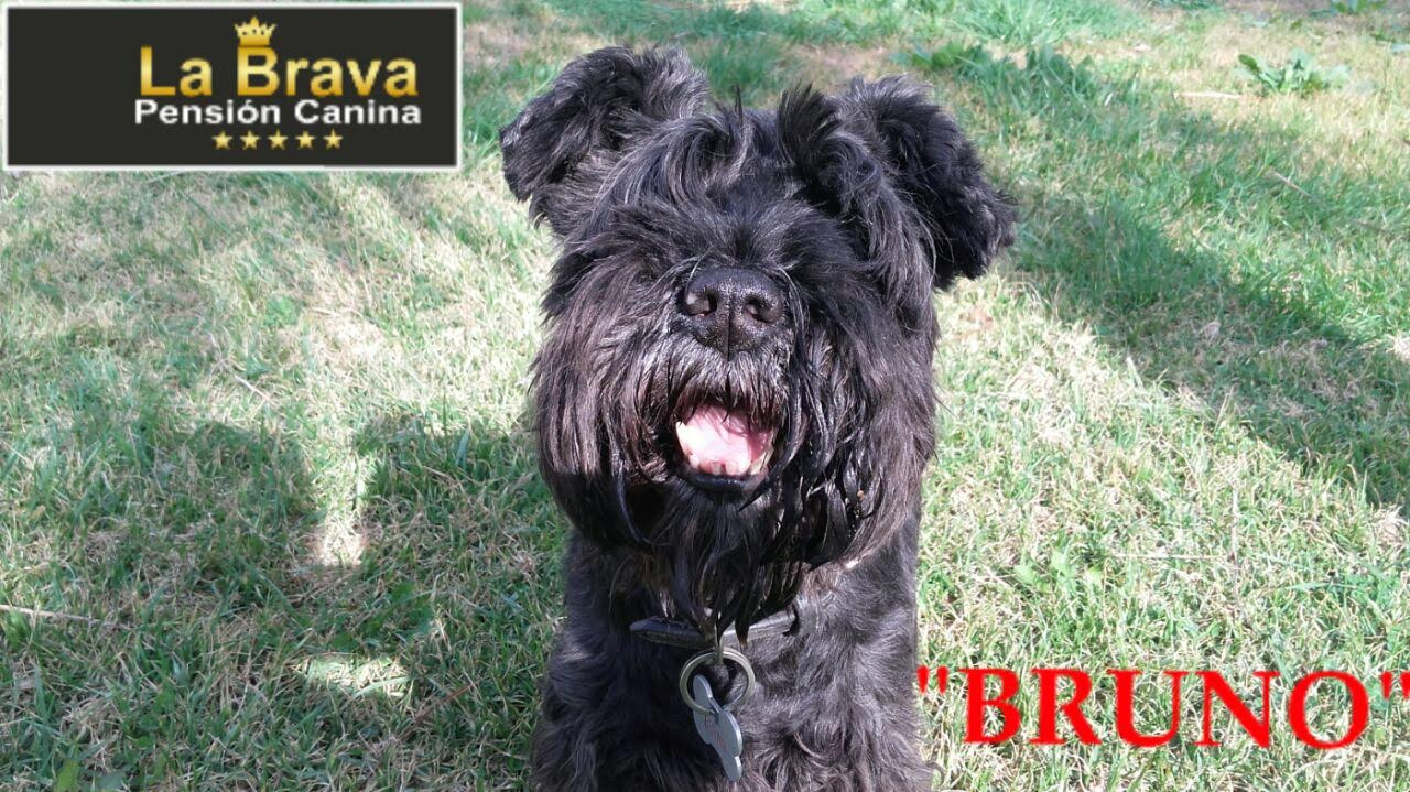 pension canina la brava mascotas (12)