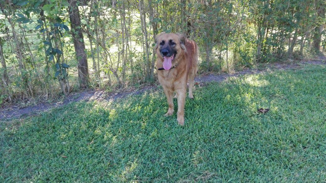 pension canina la brava mascotas (13)