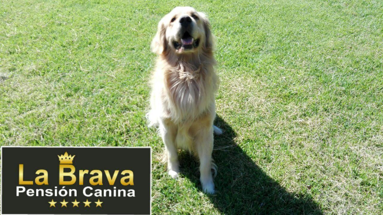 pension canina la brava mascotas (14)