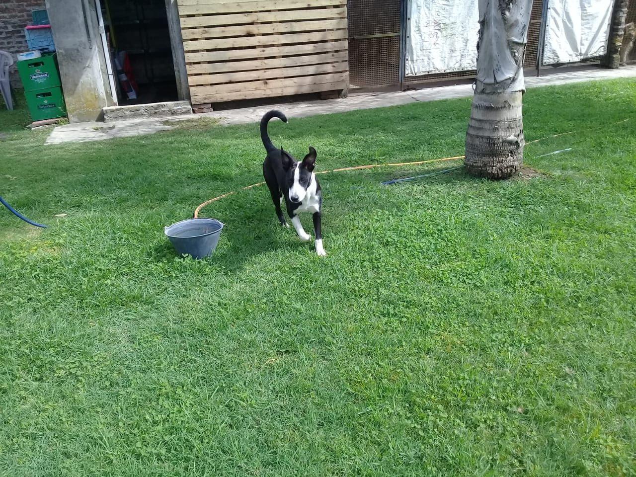 pension canina la brava mascotas (17)