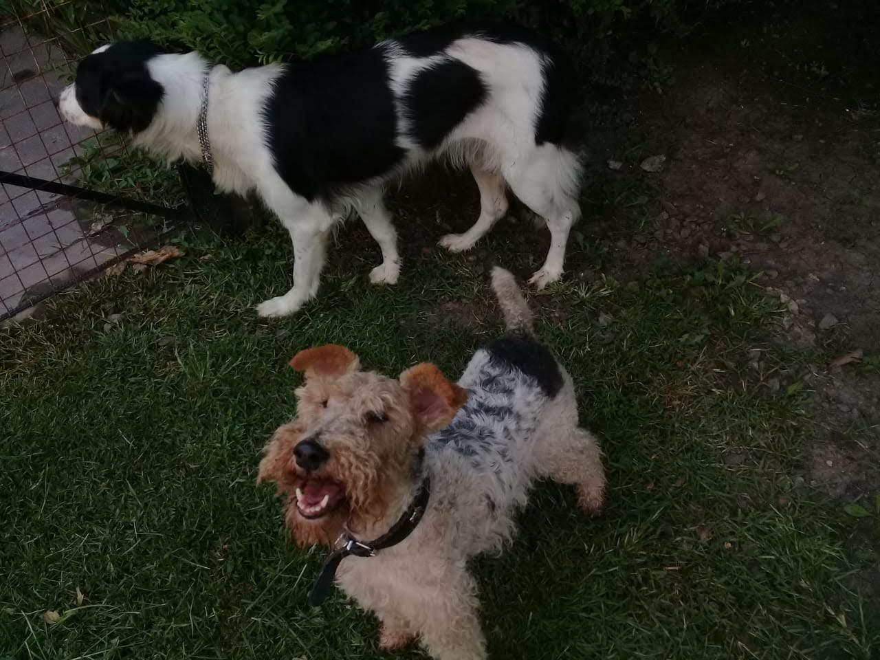 pension canina la brava mascotas (18)