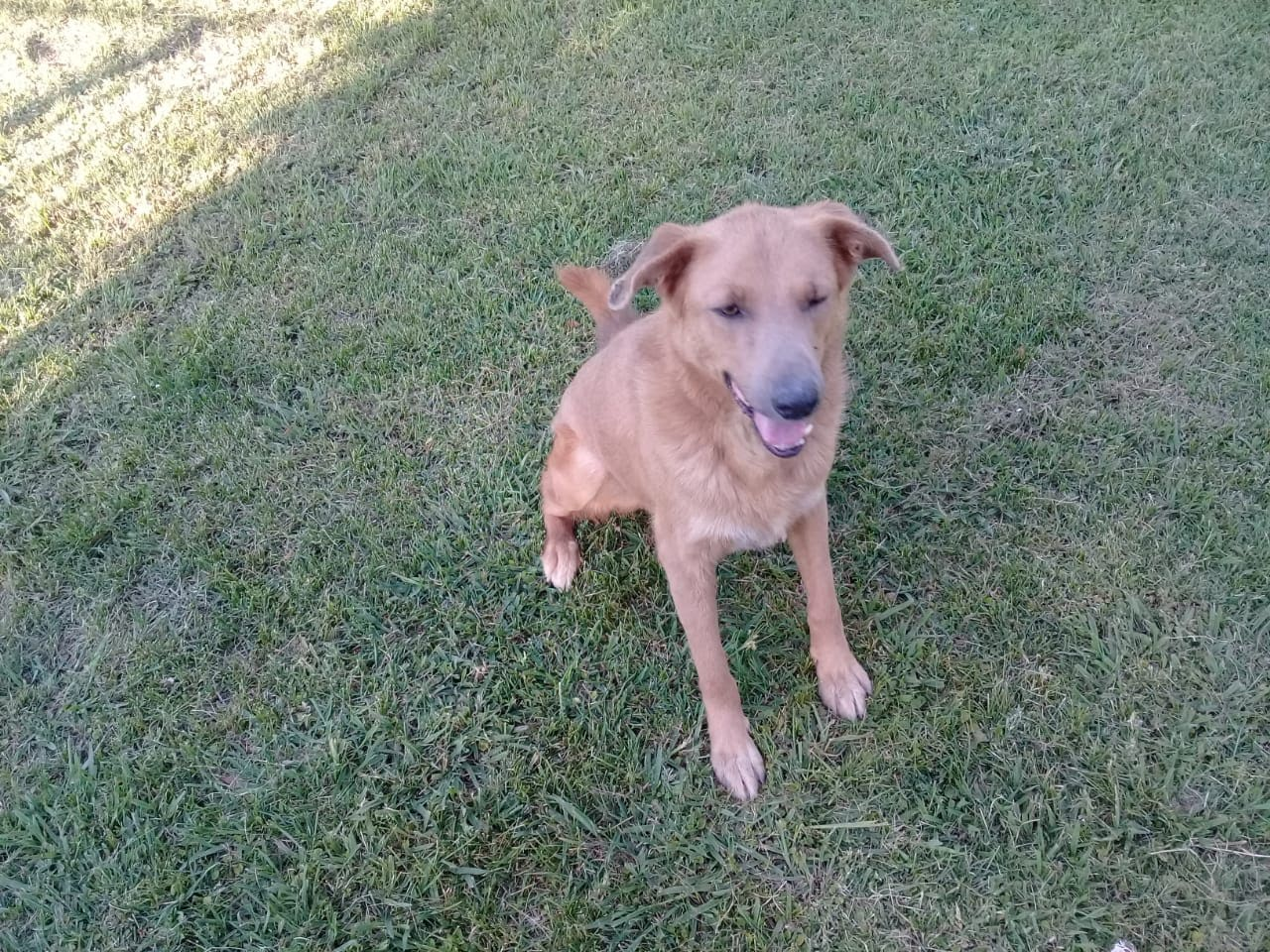 pension canina la brava mascotas (19)