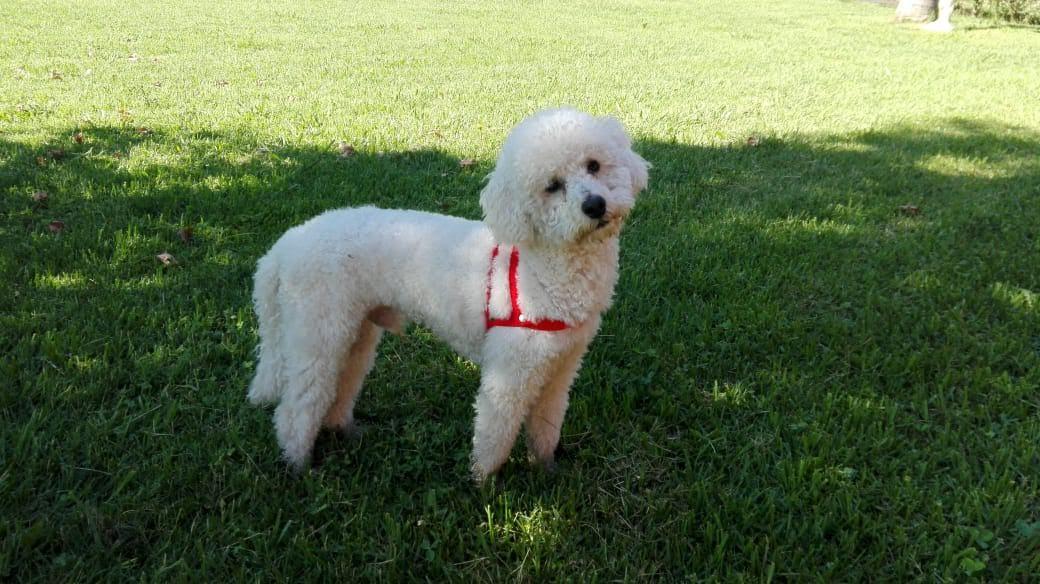 pension canina la brava mascotas (2)