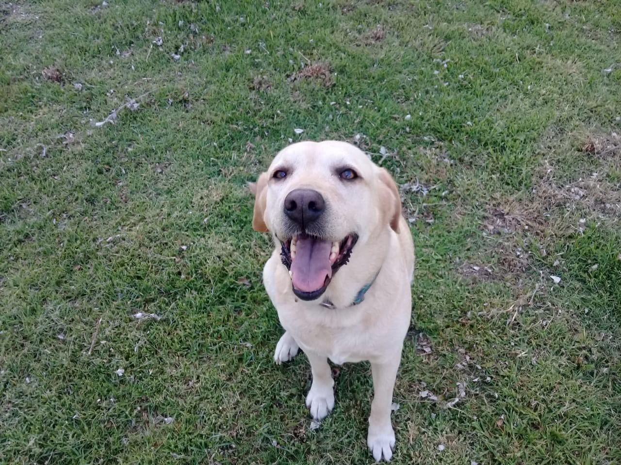 pension canina la brava mascotas (20)