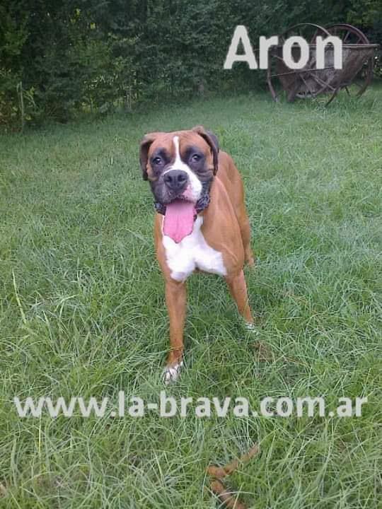pension canina la brava mascotas (22)