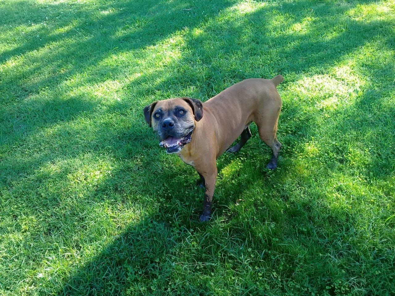 pension canina la brava mascotas (23)