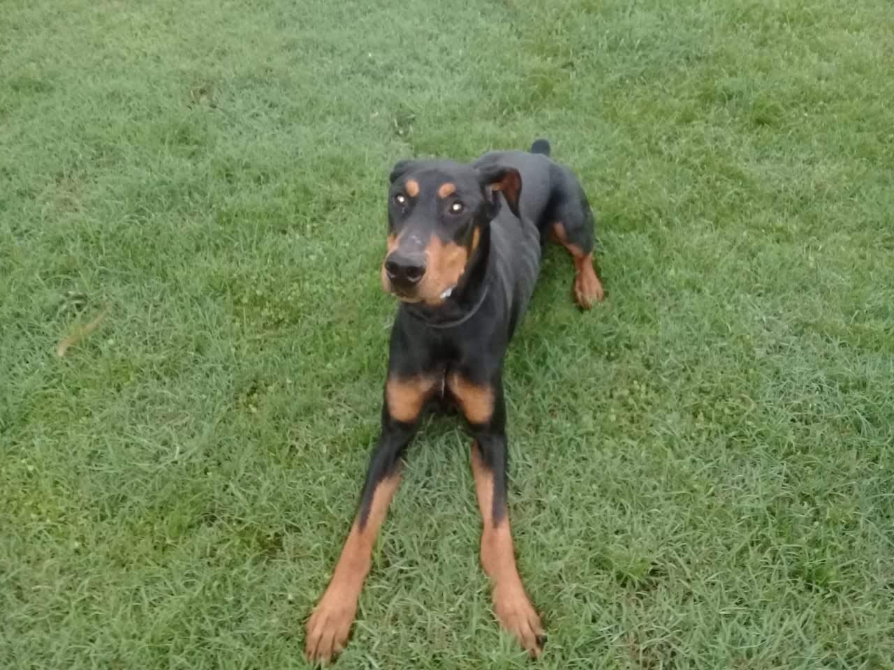 pension canina la brava mascotas (24)
