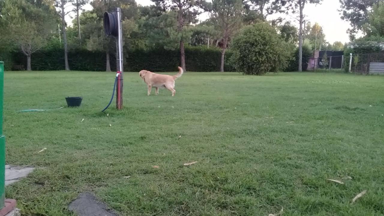pension canina la brava mascotas (25)