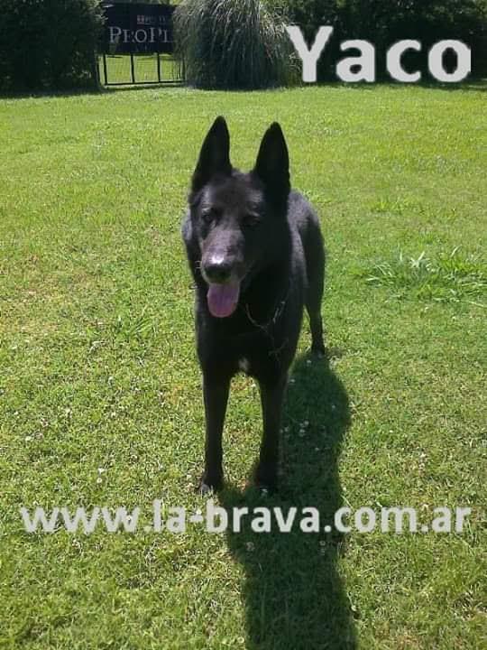 pension canina la brava mascotas (28)