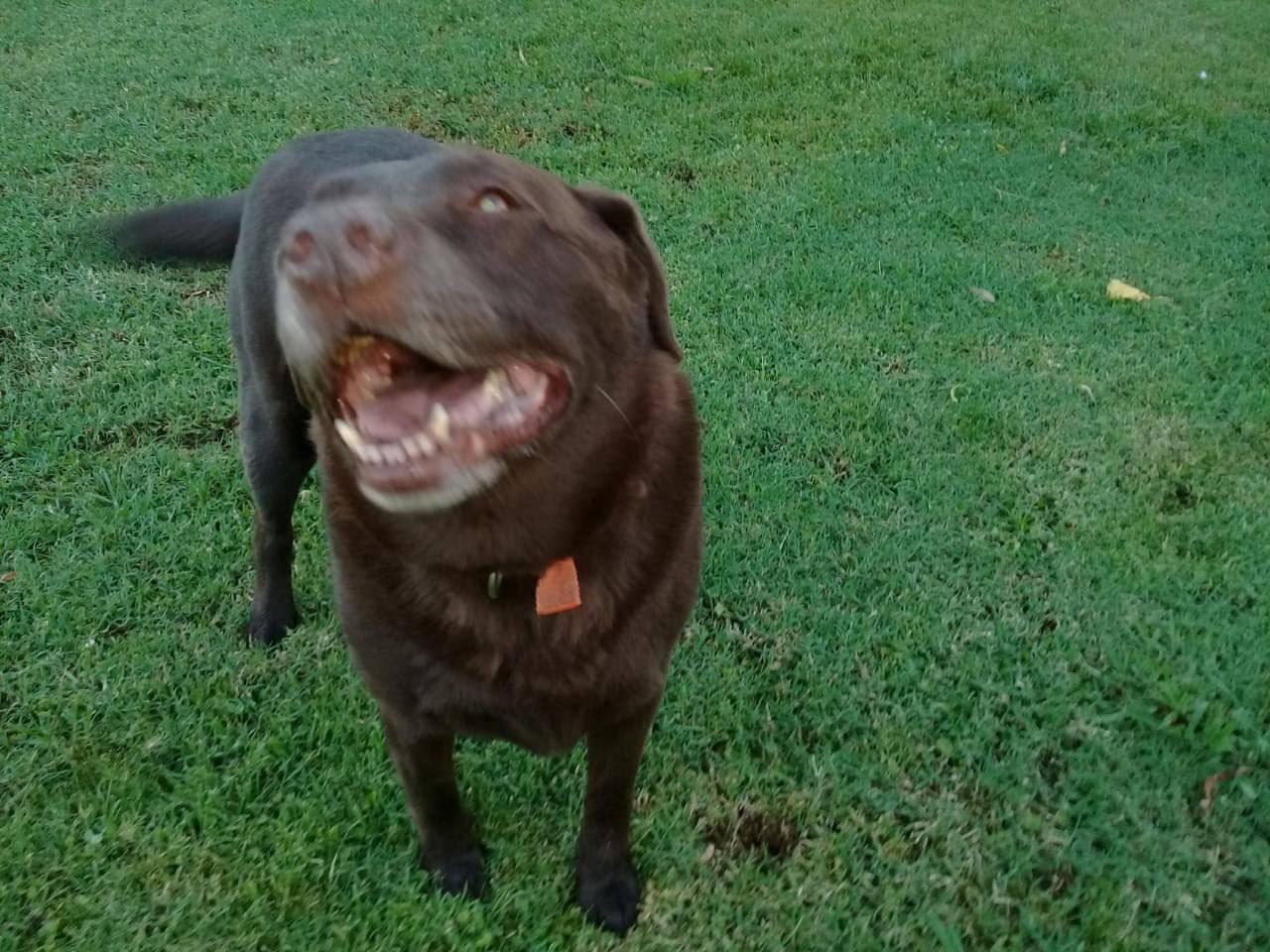 pension canina la brava mascotas (29)