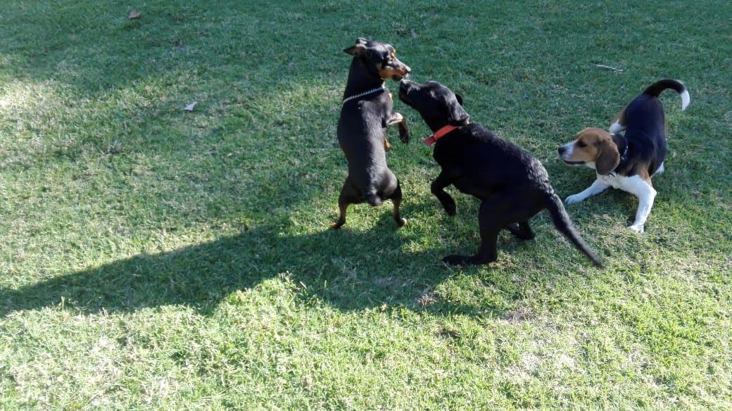 pension canina la brava mascotas (3)