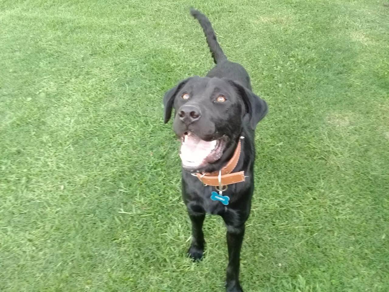 pension canina la brava mascotas (30)