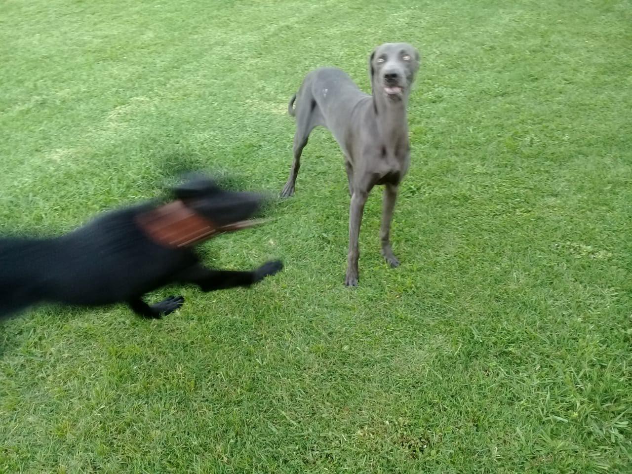 pension canina la brava mascotas (31)