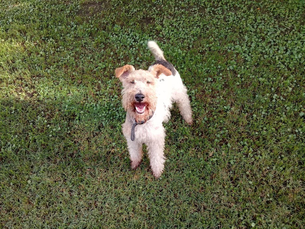 pension canina la brava mascotas (32)
