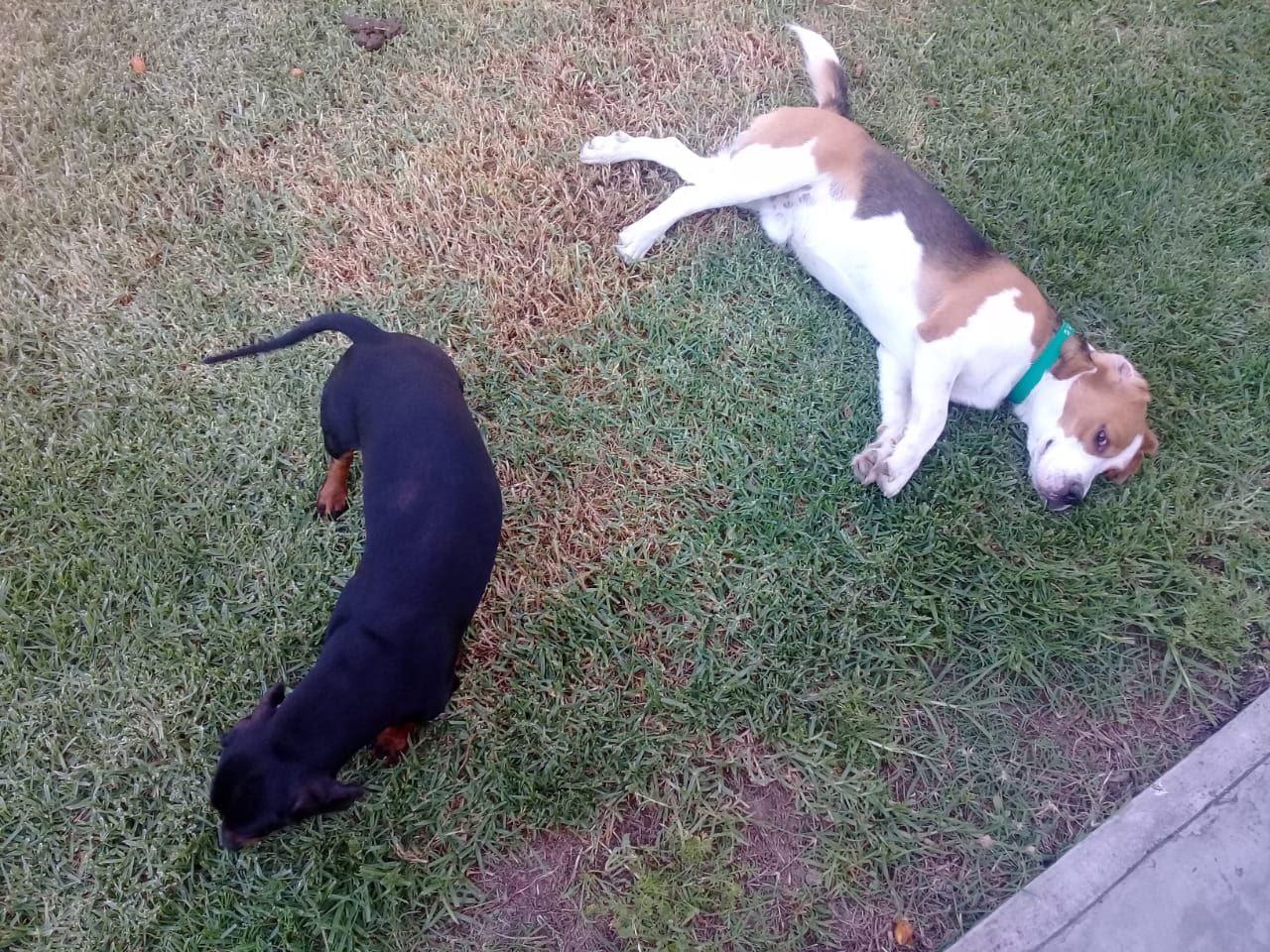 pension canina la brava mascotas (34)
