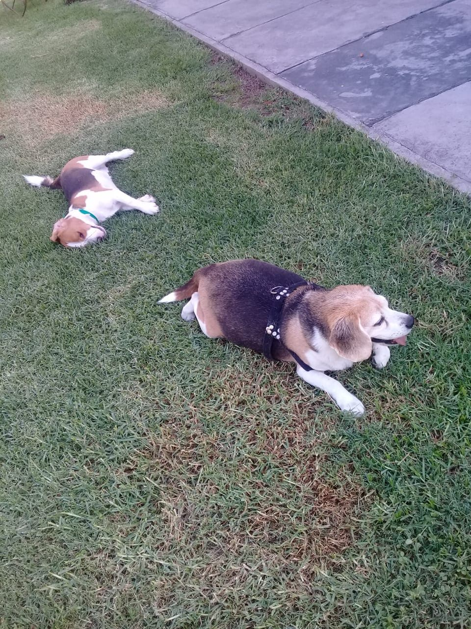 pension canina la brava mascotas (35)