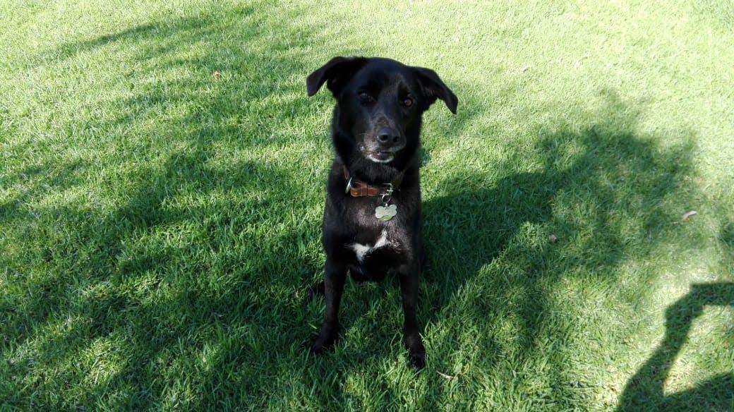 pension canina la brava mascotas (4)