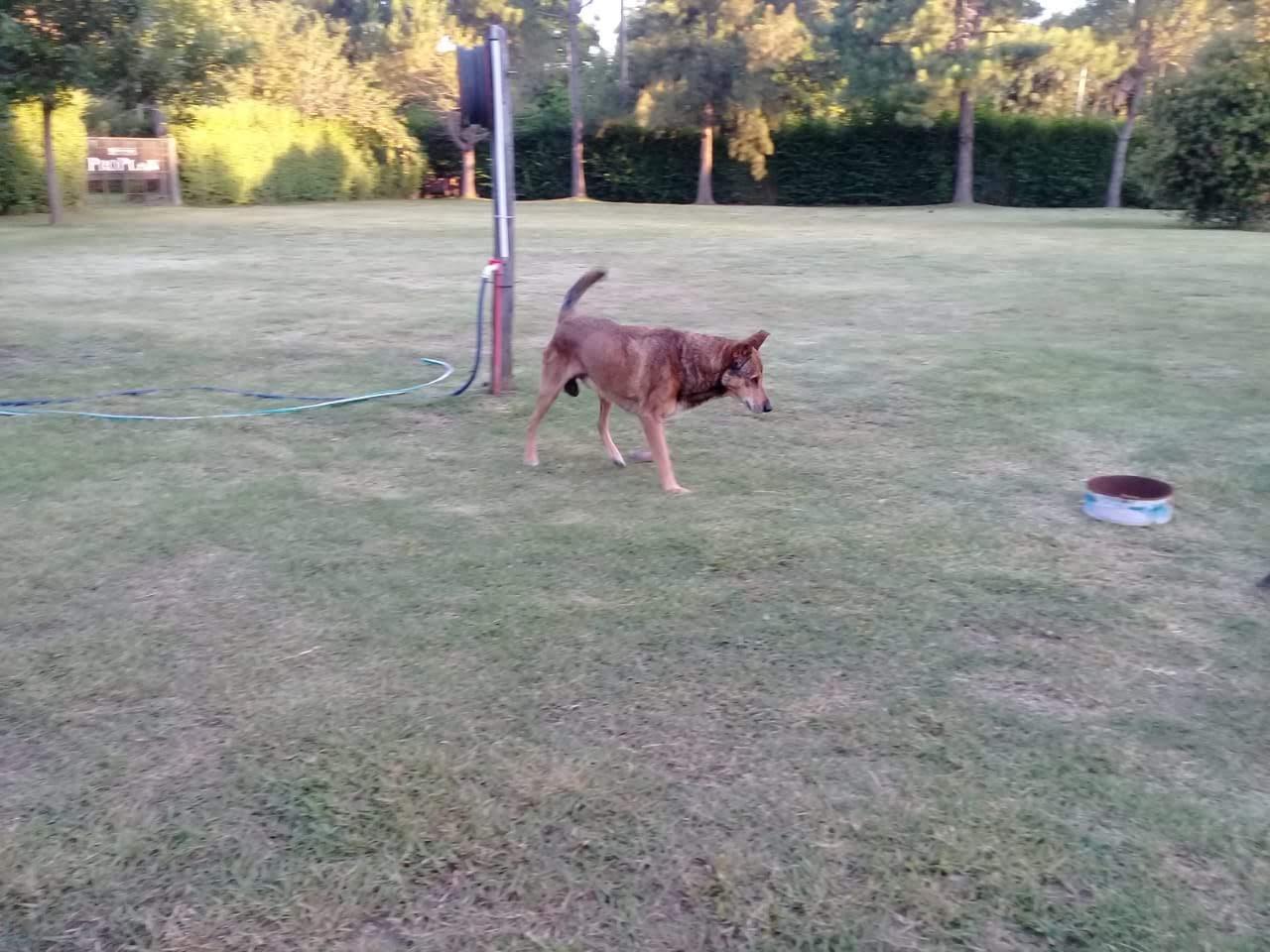 pension canina la brava mascotas (44)