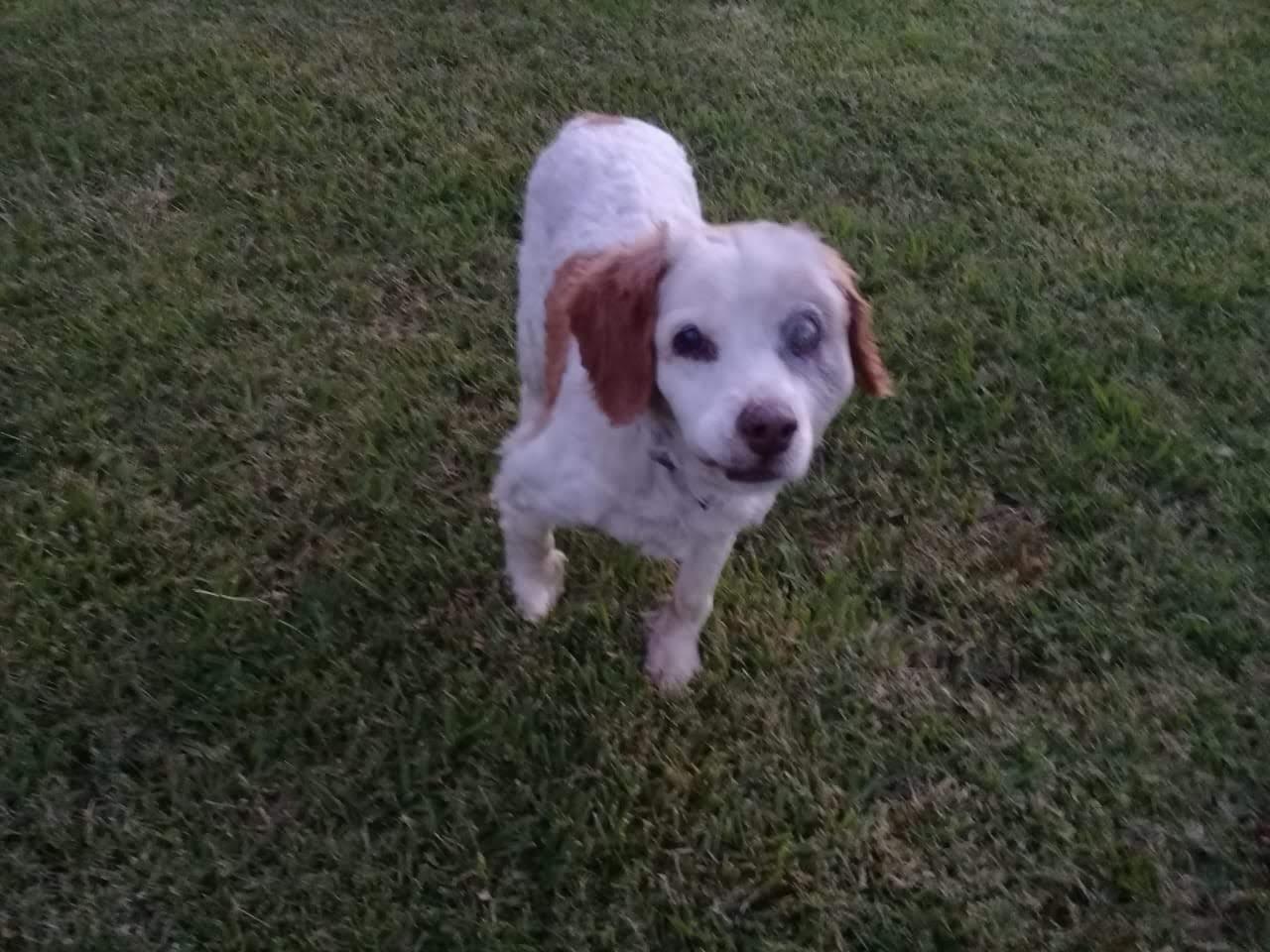 pension canina la brava mascotas (47)