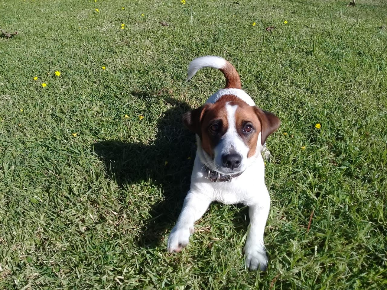 pension canina la brava mascotas (6)