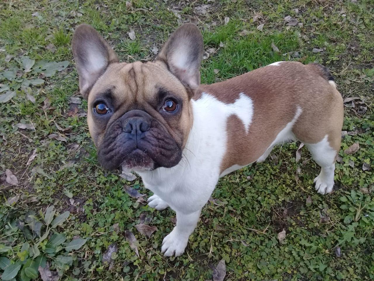 pension canina la brava mascotas (7)