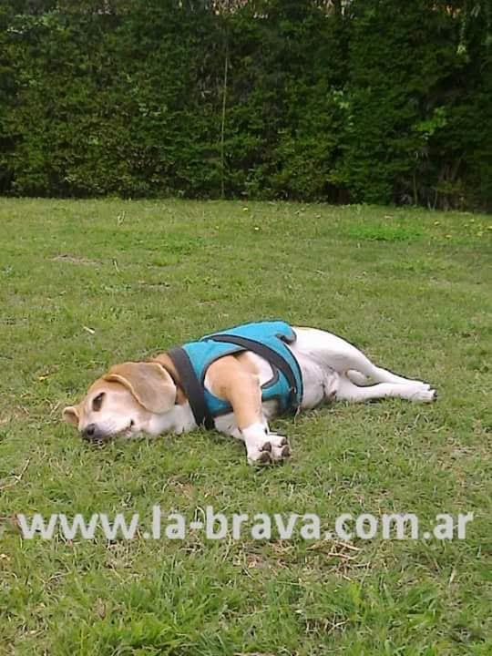 pension canina la brava mascotas (70)