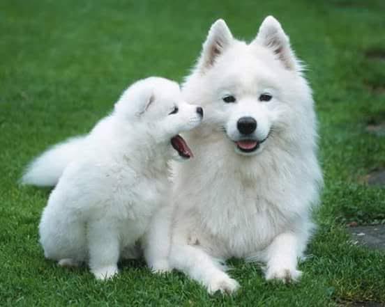 pension canina la brava mascotas (71)
