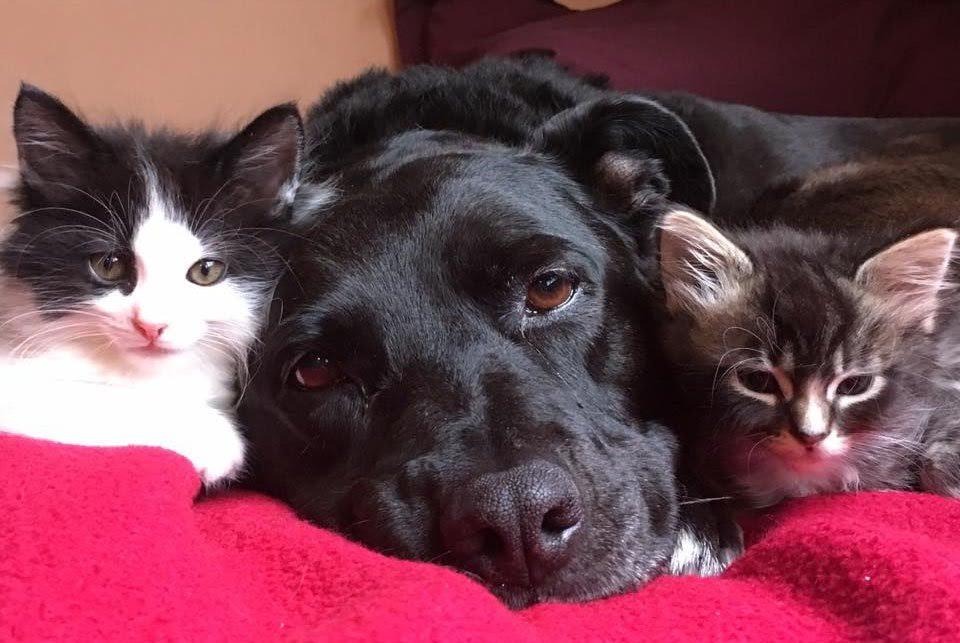 pension canina la brava mascotas (72)