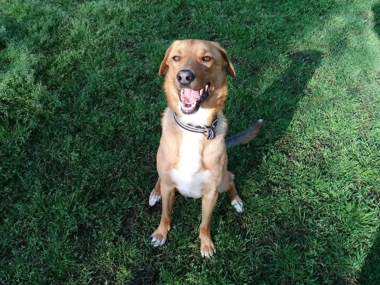 pension canina la brava mascotas (73)