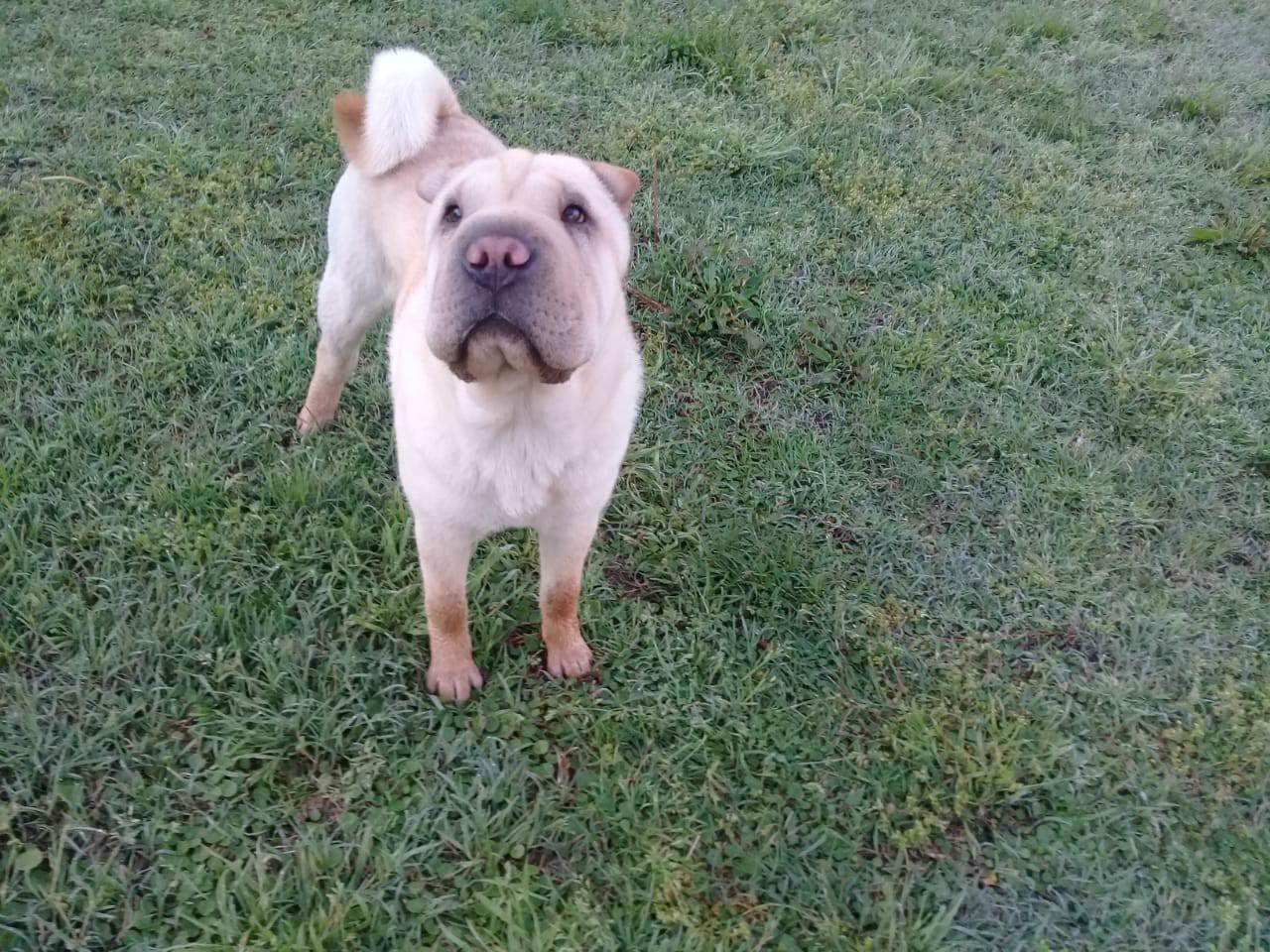 pension canina la brava mascotas (77)