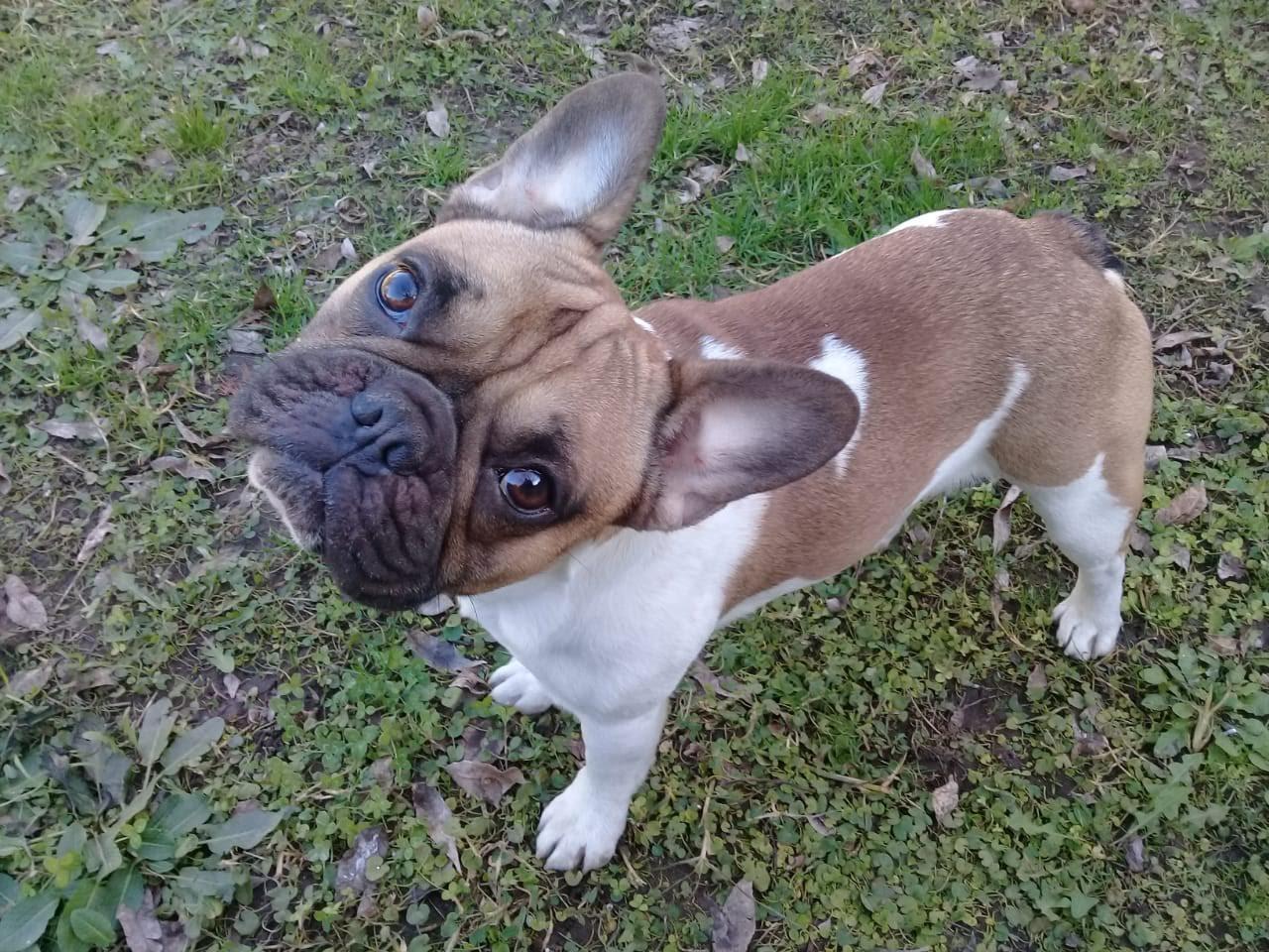 pension canina la brava mascotas (8)