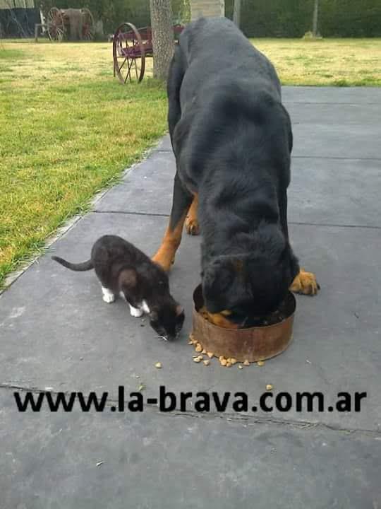 pension canina la brava mascotas (81)