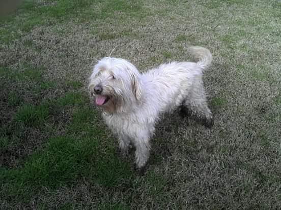 pension canina la brava mascotas (83)