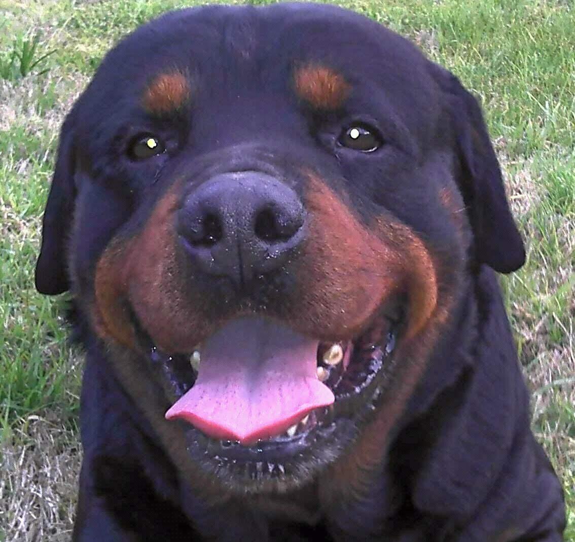 pension canina la brava mascotas (85)