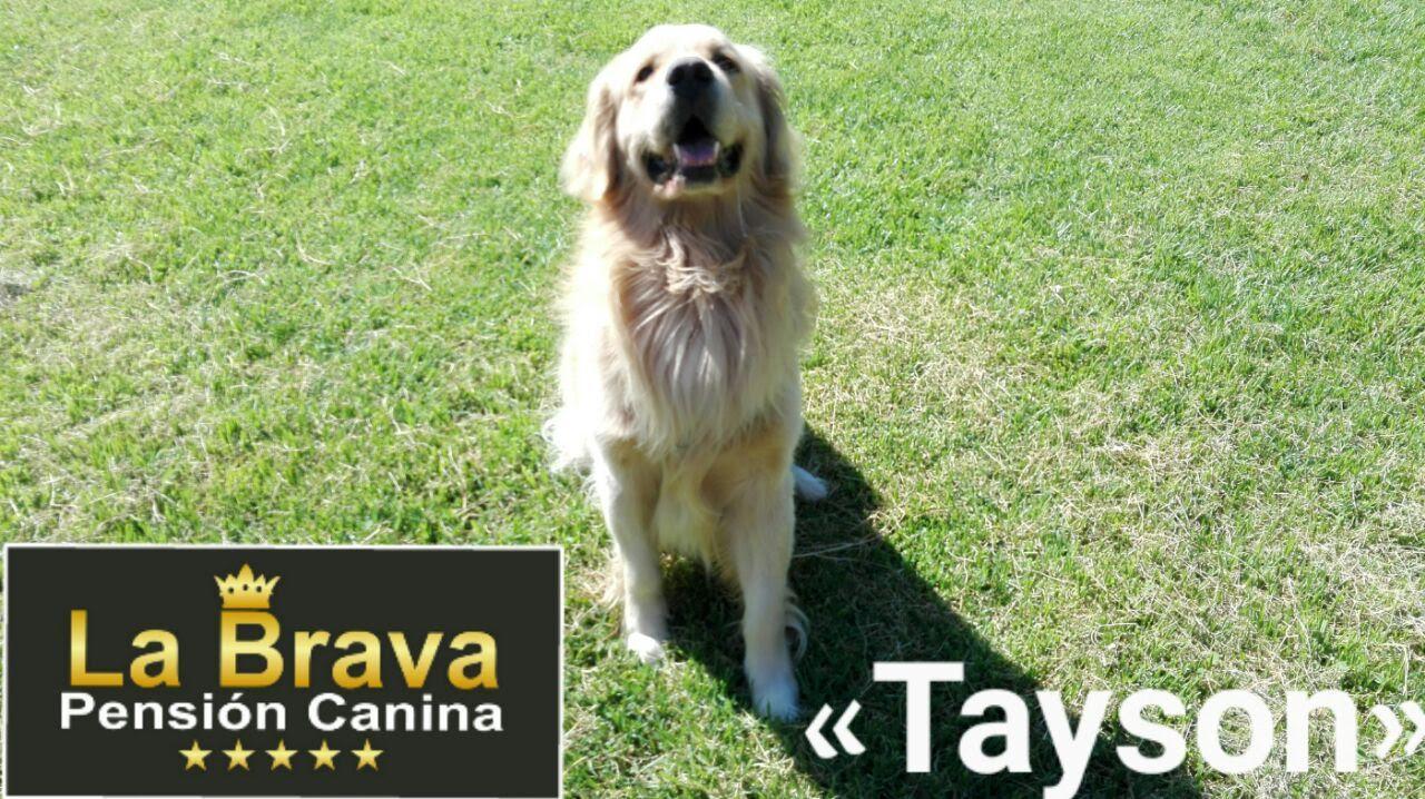 pension canina la brava mascotas (86)