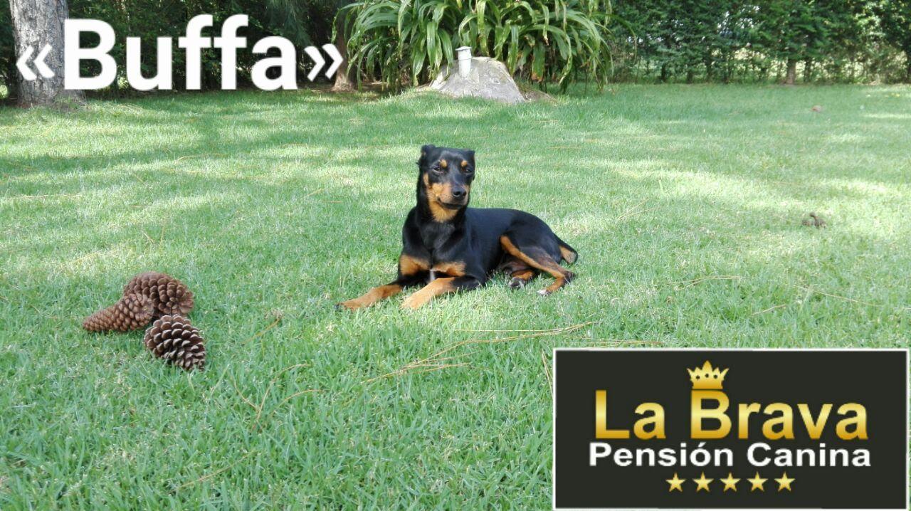 pension canina la brava mascotas (89)