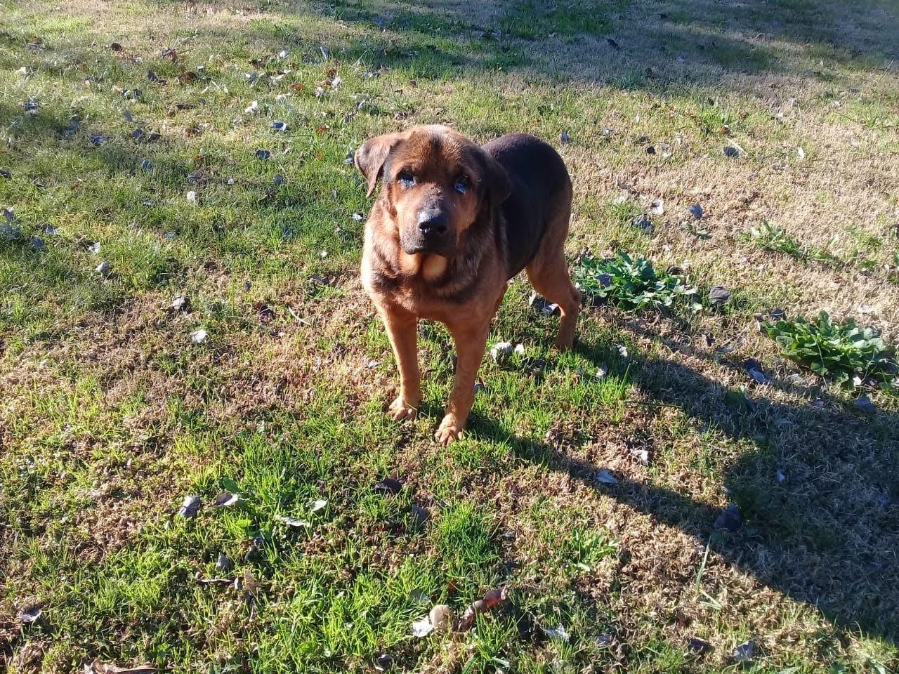 pension canina la brava mascotas (9)