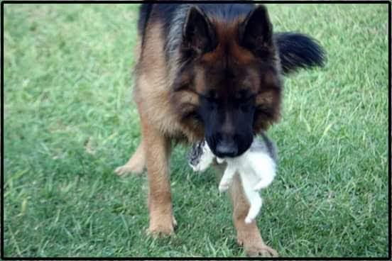 pension canina la brava mascotas (91)
